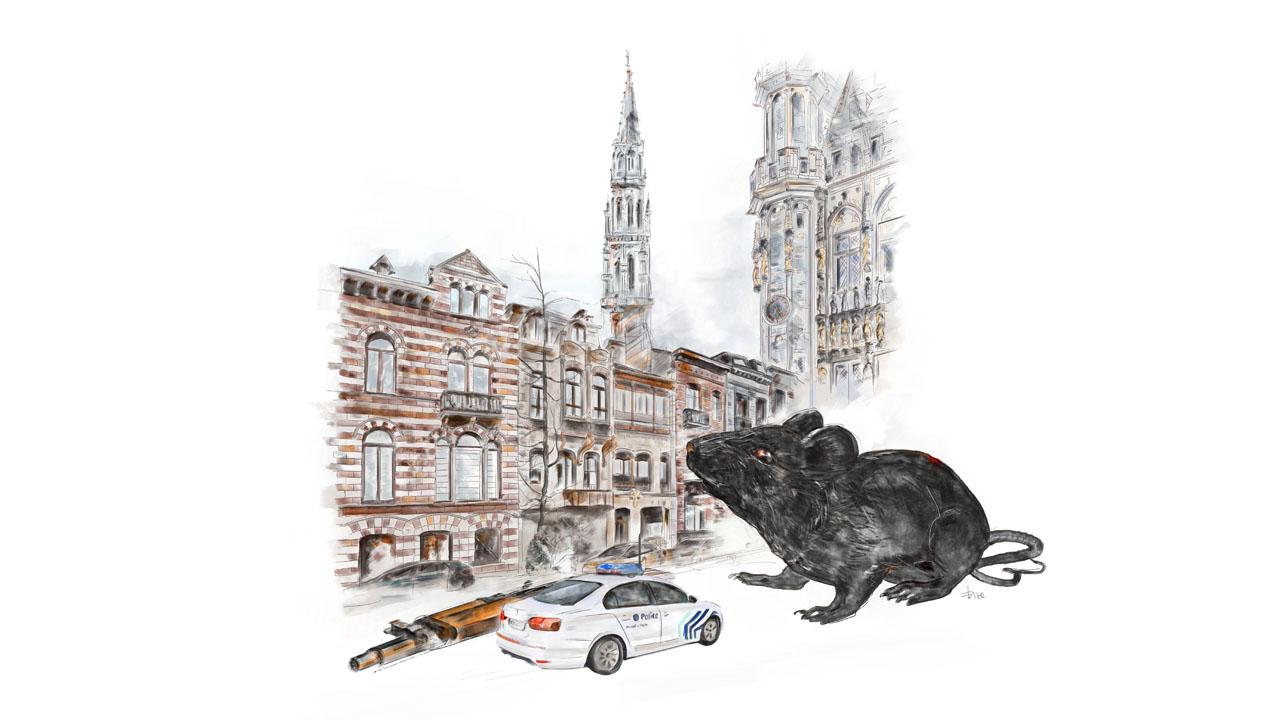 le rat de molenbeek illustration eligrafica